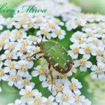 季節の花や自然など、四季を愛でるブログを始めるにあたって。