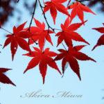 嵐山渓谷の紅葉は、風のストロークが描く水面の幻想絵画。