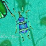 昆虫という生きる宝石を愛でる至福。【としまえん昆虫館】
