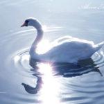 冬の陽だまりと、そして月光の中の水鳥たち。【水戸・千波湖】