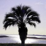 冬の日差しが透明な日、フラッと海を感じに♪【葛西臨海公園】