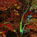秋の、幽玄なる色彩の妙。【武蔵丘陵森林公園のライトアップ】