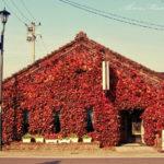 城下町の秋色を捜して。【喜多方の路地裏】
