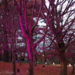 樹木の存在感が際立ったライトアップだ。【武蔵丘陵森林公園】