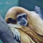 ピクニック気分で癒される。【横浜・金沢動物園&自然公園】
