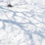 始まりは、いつも「白」から【奥日光・初春のスノーワールド】