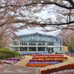 今年の桜は「HANA・BIYORI (ハナビヨリ)」で見納めに。
