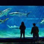 サメの飼育数日本一を誇る【アクアワールド・大洗水族館】