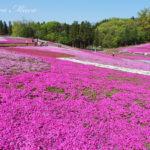 芝桜の丘は快適な特急ラビューに乗ってGO!【秩父・羊山公園】