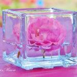 ハウステンボスで、バラの香りとイルミネーションに癒されて。