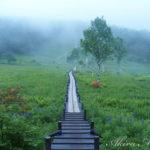 霧が描く、高原の幻想的な色彩【信州・入笠湿原(ニュウカサ)】