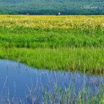 雄国沼、そこは「桃源郷」に一番近い場所【福島・裏磐梯】