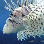 フッと水中の生物達に出会いたくなったら【葛西臨海水族園】